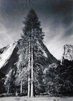 "<em>Trees and Cliff,</em> 1954<br />Image: 11 1/8 x 8 1/16""<br />Paper: 11 1/8 x 8 1 /16""<br />Mount: 16 3/4 x 13 1/2"""