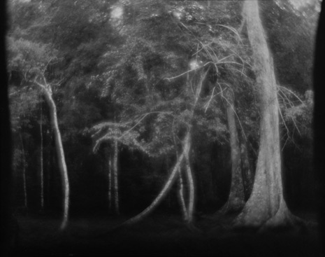 "<em>Untitled (Trees)</em><br />Gelatin silver print on printing out paper<br />Image: 7 5/8 x 9 5/8""; Paper: 8 x 10"""""