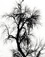 <em>Ash Tree, Arizona</em>, 1958<br>Gelatin silver print