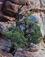 <em>Juniper Tree, Arches National Monument, Utah</em>, 1958<br>Vintage dye-transfer print