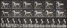"Eadweard Muybridge<br><em>Animal Locomotion, pl. 610</em>, 1887</br>Collotype<br>Image: 8 x 13 1/4"""