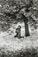 """Edouard Boubat</br><em>Parc de Sceaux, Cerisiers Japonais,</em> 1983<br>Gelatin silver print</br>Image: 13 7/8 x 9 1/2"""""""